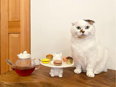 Cat's Nap Time 第一弾の商品をご紹介♪