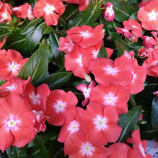 暑さに強い夏の植物たち☆